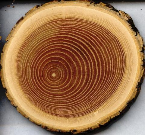 Làm đồng hồ bằng gỗ_ Moctrangia.com